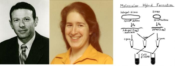 ▲그림 1 최초로 재조합 DNA 실험을 계획한 스탠포드 대학의 폴 버그 (Paul Berg)와 대학원생 자넷 메르츠 (Janet E Mertz). 이들은 동물바이러스인 SV40 의 DNA와 박테리오파지 유래의 DNA를 서로 결합하여 재조합 DNA를 만들고, 이를 대장균에 도입할 계획을 세웠다. 그러나 이들의 실험계획은 혹시 있을지도 모르는 위험성을 염려한 동료 학자들의 반응 때문에 실제로 실현되지 못했다.