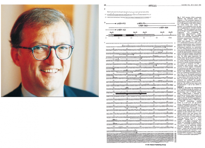 ▲그림 3 EGFR 유전자를 처음 클로닝한 악셀 율리히 (Axel Ullrich). 지금으로는 상상할 수 없는 일이지만 1980년대 중반 진핵생물 유래의 하나의 유전자의 염기서열을 밝히는 것은 네이처 등의 아티클로 개제되는 큰 뉴스였으며, 전체 염기 서열이 그림과 같이 지면을 꽉 채워 실리곤 했었다.