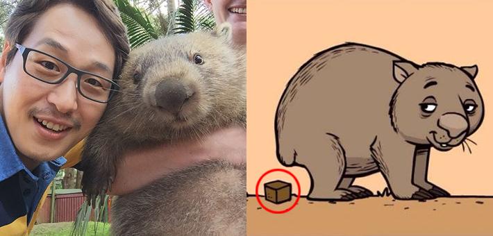 네모난 응가를 하는 호주의 귀요미 '웜뱃(wombat)'