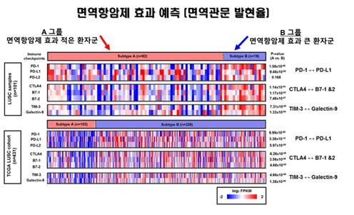 ▲한국인 101 명의 폐 편평상피세포암 조직에서 PD-L1과 같은 여러 면역관문 바이오마커들의 RNA 발현량을 확인한 결과, 면역에 따라서 그룹화된 A와 B 사이에 통계적으로 면역관문 유전자 발현량에 유의한 차이가 있음을 확했다. 또한, 암 유전체 지도(TCGA, The Cancer Genome Atlas) 데이터베이스를 통해 431명의 폐 편평상피세포암 환자에서도 이와 같은 패턴이 있음을 입증해 면역항암제에 효용성이 높은 환자군을 식별하는 새로운 바이오마커로서의 가능성을 제시했다. 마크로젠 제공.