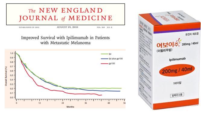 ▲그림 1 : 2010년 NEJM에 발표된 전이성 흑색종 환자에 대한 이필리무맙 임상 3상의 결과. 이필리무맙을 투여받은 환자 (녹색 혹은 청색) 은 대조군인 펩타이드 백신을 투여받은 환자에 비해서 생존율이 유의적으로 올라가는 것이 확인되었다. 이 임상시험에 근거하여 FDA는 2011년 이필리무맙의 판매를 허가하였고, '여보이' 라는 상품명으로 팔리게 된 이필리무맙은 면역체크포인트 억제제라는 새로운 종류의 항암제 시장의 서막을 열었다.