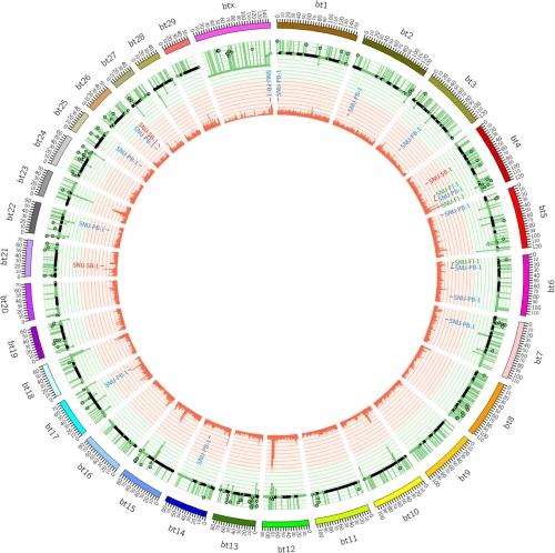 ▲형질 전환 소 게놈 일부. 테라젠이텍스 제공.