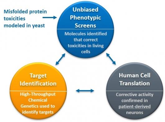 ▲Yumanity의 효모-환자 iPSC세포 약물발굴 플랫폼기술 (자료: Yumanity 제공)
