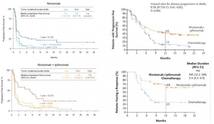 ▲그림 1 : 환자의 암조직 내에 발생한 돌연변이가 많을수록 면역체크포인트 억제제에 의한 항암요법은 효율적으로 작용한다. 종양변이부담 (Tumor Mutation Burden : TMB)이라는 용어로 표시되는 수치가 높은 환자군일수록 면역체크포인트 억제제가 잘 반응하며, 니볼루맙과 이필리무맙의 조합에 의해서 그 효과가 더욱 강화된다[9[. 결과적으로 종양변이부담이 높은 환자군에 있어서 두 가지 면역체크포인트 억제제의 사용을 통해 1년간 무진행 생존율 (Progression Free Survival) 을 화학요법의 13%에서 현저하게 향상된 43% 로 향상시킬 수 있었다[10].