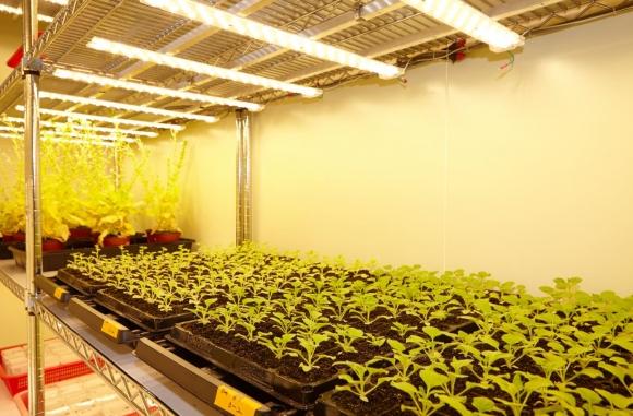 ▲지플러스생명과학은 크리스퍼기술을 활용해 식물기반 항체의약품을 개발하고 있다. 지플러스생명과학 실험실 사진