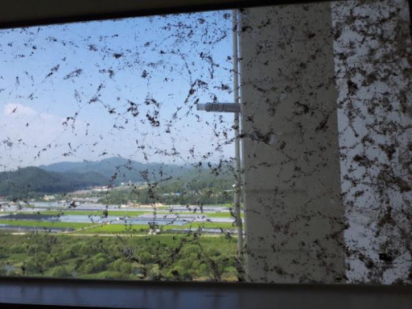 ▲전남 나주시 남평읍 드들강변에 있는 아파트 외벽에 수많은 거미떼가 시커멓게 뒤덮어 주민들이 큰 불편을 겪고 있다. (연합뉴스)