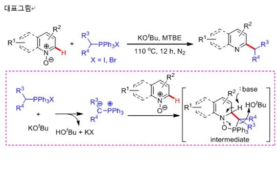 ▲Wittig 시약(포스포늄 염, PPh3X가 들어가 있는 시약)을 사용해 피리딘과 퀴놀린의 산화 형태인 N-oxide 내 2번 위치에 존재하는 탄소-수소(붉은색으로 표시) 결합에 직접적으로 Wittig 시약 내에 존재하는 알킬기(R3R4CH-)를 도입하면서 피리딘과 퀴놀린의 산화 형태가 동시에 환원돼 2번 위치에 알킬화가 되어 있는 피리딘 및 퀴놀린을 합성하는 반응식임. 아래 분홍색 점선 박스 안에 들어 있는 그림은 본 화학반응의 구체적인 반응메커니즘으로서 Wittig 시약이 염기(KOtBu) 조건 하에서 포스포늄 일라이드 중간체를 형성하고 피리딘과 퀴놀린 N-oxide와의 반응을 통해 알킬기의 도입 및 환원 과정이 동시에 일어날 수 있음을 설명. 한국화학연구원.