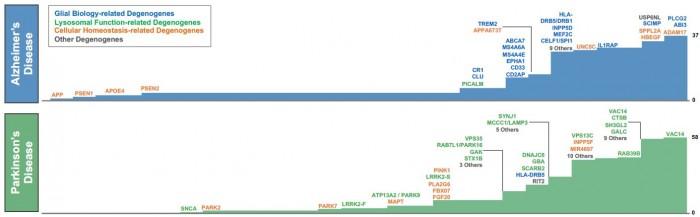 ▲1991~2018년 9월까지 밝혀진 알츠하이머병, 파킨슨병 발병률 관련 유전자, 뇌 교세포 관련 유전자(파란색), 리소좀 관련 유전자(초록색), 세포 항상성 관련 유전자(주황색), 이외 검은색으로 표기. 디날리 테라퓨틱스 자료.