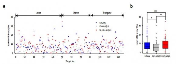▲Cpf1과 기존의 CRISPR RNA(회색), 최적화된 길이의 우라실(U)을 붙인 CRISPR RNA(빨간색), 그리고 Cas9(파란색)으로 표적 유전자 115개를 교정한 효율을 나타낸 점도표(Dot-plot) (b) (a) 결과를 통계처리한 상자그림(Box-and whisker plot). (그림: 한국생명공학연구원 제공, 출처: doi: 10.1038/s41467-018-06129-w)