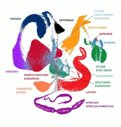 ▲gnomAD v2.1의 전 세계 국적/인종별 조상(ancestry) 분포 그림.