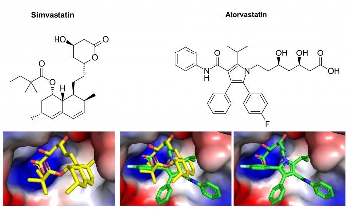 ▲그림 3. 심바스타틴과 아토바스타틴의 HMG 환원효소에의 결합 구조. 심바스타틴 (노란색)과 아토바스타틴 (녹색) 의 HMG-CoA와 구조적으로 유사한 부분은 HMG 환원효소에 정확히 동일한 방식으로 결합한다. 그러나 아토바스타틴의 피롤 고리에 추가된 페닐기와 페닐카바모일기는 HMG 환원효소와 추가적인 결합을 유도하고, 결과적으로 심바스타틴 (IC50=22M) 에 비해서 좀 더 강한 결합 (IC50=7uM)을 가능케 한다.