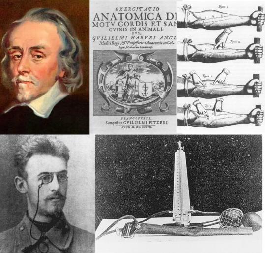 ▲그림 2. 좌상: 근대적인 혈액 순환 이론을 최초로 제시한 윌리엄 하비 (William Harvey, 1578-1657). 그는 1628년 출판된 'De motu cordis' 라는 저서를 통하여 혈액이 심장에 의해서 동맥으로 온 몸에 퍼지고, 이것이 말초혈관을 통하여 정맥을 통해 심장으로 되돌아온다는 혈액 순환론을 제시하였다. 이를 실험적으로 입증하기 위하여 그는 철사로 팔을 묶고 동맥과 정맥에서 피가 차오르는 것을 관찰하여 실제로 혈액이 동맥에서 정맥으로 순환함을 보여주었다 (우상). 하단 : 최초의 청진혈압계를 개발한 러시아의 의사 니콜라이 코로트코프 (Nikolai Korotkov, 1874-1920). 그는 혈관에 압박을 가하여 혈액의 흐름을 막은 후 압력을 서서히 낮추면 혈관에서 특정한 음향이 들린다는 것을 발견하였고, 음향이 들리는 시점에서 수축기 혈압과 이완기 혈압을 알아낼 수 있다는 것을 발견하였다. 그가 개발한 청진혈압계를 통하여 혈압을 비침습적으로 측정할 수 있게 되었고, 혈압과 다른 질병과의 관계를 알아볼 수 있는 기초가 되었다.