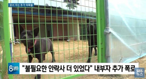 (SBS 화면 캡처)