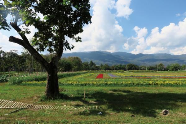 ▲어디서든 초록의 풍경과 수만 가지 꽃을 볼 수 있는 곳(이화자 작가 제공)