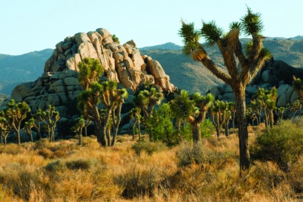 ▲팜스프링스는 빼어난 자연 경관을 자랑한다.(사진제공=캘리포니아 관광청)
