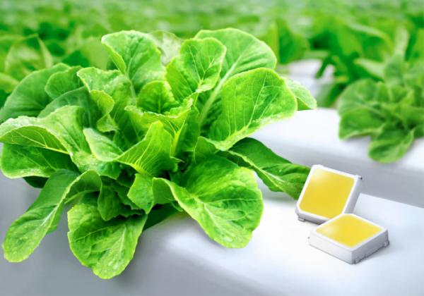 ▲삼성전자의 식물 생장용 백색 LED(사진제공 삼성전자)