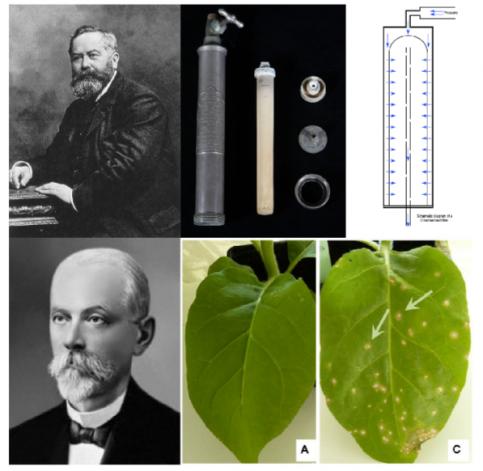 ▲그림 2 : 파스퇴르의 조수이던 찰스 챔버랜드 (좌상) 는 파스퇴르의 무균 실험을 가능하게 하기 위하여 액체를 여과하여 세균을 걸러내는 '챔버랜드 필터' (Chamberland filter) 를 고안했다 (좌중,우). 러시아의 생물학자 디미트리 이바노프스키 (Dimitri Ivanovsky)는 식물에 일어나는 모자이크병증의 추출물을 챔버랜드 필터로 걸러내서 박테리아를 제거하더라도 모자이크병이 나타난다는 것을 처음 발견하여 '박테리아보다도 작은 입자' 가 병의 원인이라는 것을 알게 되었다.