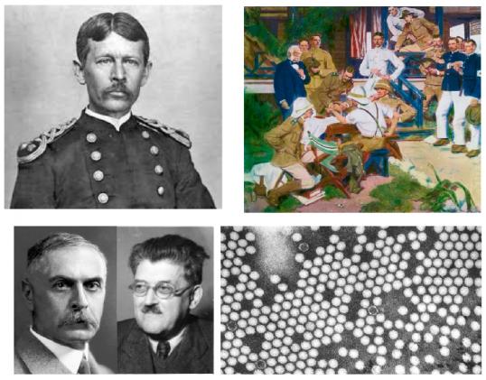 ▲그림 3 : 미 육군 군의관 월터 리드(좌상)는 쿠바에서 황열병이 모기에 의해서 전파된다는 것을 발견하였고, 직접 모기를 자원자에 접종하여 황열병이 발생한다는 것을 확인하여 모기가 황열병에 의해서 옮겨진다는 것을 발견하였다. 1908년칼 란트슈타이너와 에르윈 포퍼 (좌하) 는 소아마비로 숨진 환자의 척수 조직액을 필터링한 액체를 원숭이에 주사하여 소아마비 증상이 나타난다는 것을 보였다. 소아마비 바이러스 (우하)의 정제와 전자 현미경적 관찰은 란트슈타이너와 포퍼의 발견 이후에 약 30여년 뒤에나 가능했었다.