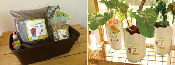 ▲실내 텃밭 키트와 봉투 화분에 키운 작물(야미가든 제공)