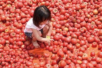 ▲논산 토마토 페스티벌 현장(논산시청 제공)