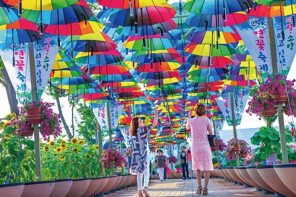 ▲무안 연꽃축제 현장(무안군청 제공)