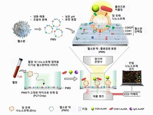 ▲나노 소포체 검출공정 자료제공 기초과학연구원