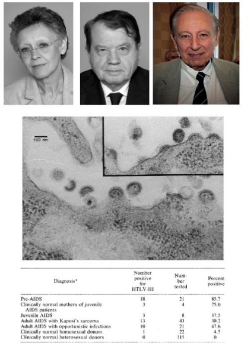 ▲그림 2 : HIV의 발견의 주 공헌자들. 프랑스 파스퇴르 연구소의 프랑소와 바레시누시 (좌, Françoise Barré-Sinoussi, 1947-)와 뤽 몽타니에 (중, Luc Montagnier, 1932-)는 AIDS 환자에서 최초로 레트로바이러스를 발견하고 이를 LAV (Lymphadenophathy Associated Virus)로 명명하였다. 미국 국립보건원(NIH)의 로버트 갤로 (우, Robert C. Gallo, 1937-)는 HIV 발견을 가능케 한 T세포의 체외 장기배양법을 개발하였으며, 최초의 T세포 유래의 레트로바이러스인 HTLV-1 을 발견하였다. 그리고 HTLV-III 라는 레트로바이러스가 여러 AIDS 환자에서 발견된다는 것을 확인함으로써 AIDS와 HIV의 관련성을 입증하였다. 이들이 발견한 LAV와 HTLV-III 는 1986년 HIV 라는 이름으로 불리게 되었다. 실제 세포에서 HIV 바이러스가 방출되는 과정의 전자현미경 사진 (중, 참고문헌 10)과 여러 AIDS 환자에서의 HIV 존재 빈도 (하. 참고문헌 11)