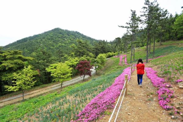 ▲산중 꽃길이 펼쳐지는 덕암산 꽃누리 생태공원.