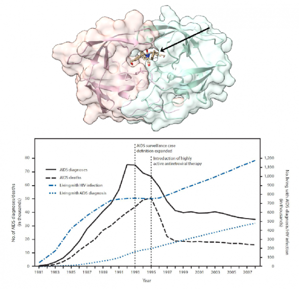 ▲그림 2. HIV 단백질 분해효소에 결합되어 있는 단백질 분해효소 저해제. HIV 단백질 분해효소는 HIV 유래 단백질로는 최초로 단백질 구조가 규명되었으며 규명된 단백질 구조에 기반하여 디자인된 약물은  HIV 단백질 프로세싱을 저해하여 HIV 증식을 억제한다. HIV 단백질 분해효소 저해제는 다른 약물과 함께 HAART의 핵심 구성요소로써 HIV 감염자의 치료에 1995년경부터 사용되기 시작하였으며, HAART 등장후에 AIDS에 의한 사망자는 급격히 줄어들게 되었다.