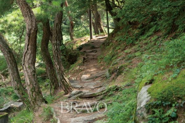 ▲석천계곡 숲길(김혜영 여행작가)