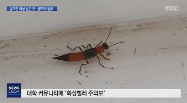 (출처=MBC 캡처)