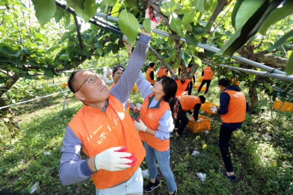 ▲옥경석(맨앞) 한화 대표이사가 8일 대전시 유성구 소재 과수농가에서 봉사단원들과 함께 배 수확 봉사활동을 펼치고 있다.(사진제공=한화)