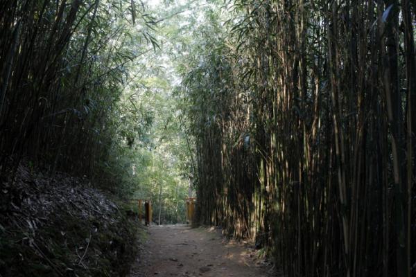 ▲불일암 입구 대숲.