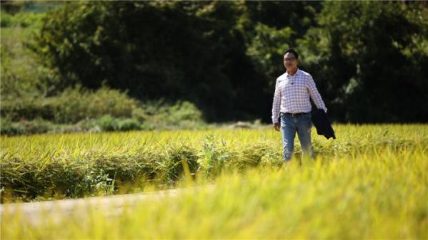 ▲경기도 김포의 황금빛 들녘을 걷는 배우 김영철(사진=KBS1)
