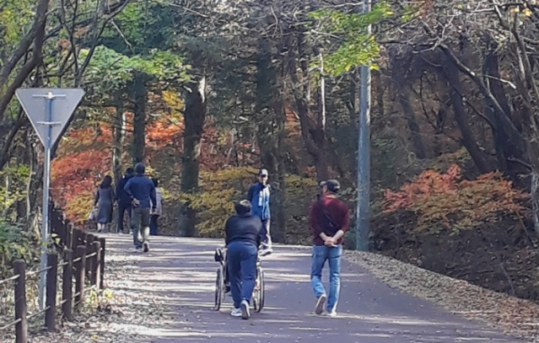 ▲무장애 탐방로 휠체어타고 가는 관광객