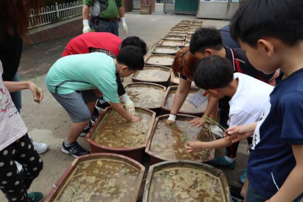 ▲면동초등학교 - 벼농사 프로젝트 (사진 = 서울시)