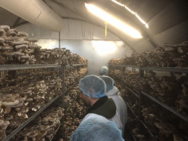 ▲스미시 머쉬룸 직원들이 버섯 농장에서 일을 하고 있다. (출처=스미스 머쉬룸 트위터)