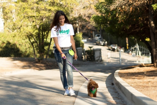 ▲소프트뱅크 산하 비전펀드가 9일(현지시간) 자신이 보유한 개 산책 대행 앱 왜그 지분 50%를 매각하기로 했다. 사진제공 왜그