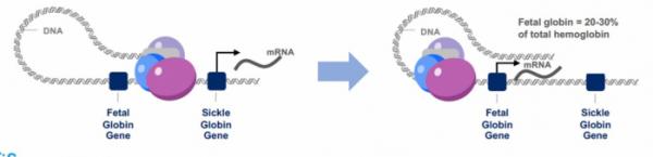 ▲시로스의 저분자 화합물 이용한 유전자 제어 기술 기전(시로스 IR 발표자료 참조)