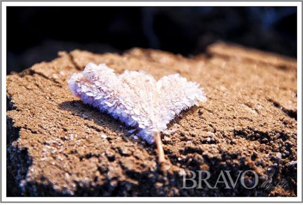 ▲돌담에 떨어진 은행잎, 선녀가 놓고 간 부채다(사진 변용도 동년기자)