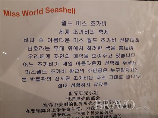 ▲월드미스 조가비 선정 관련 문안(사진 홍지영 동년기자)