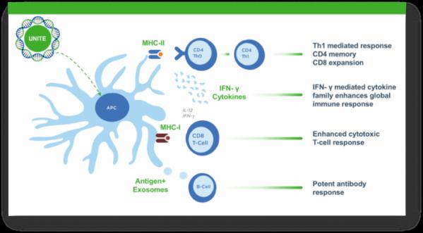 ▲이뮤노믹의 면역 백신 플랫폼 기술플랫폼