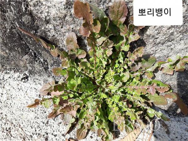 ▲북한산에서 겨울을 난 뽀리뺑이(사진 홍지영 동년기자)