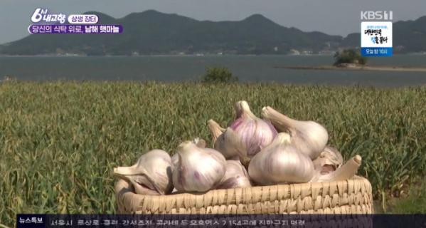 ▲남해 햇마늘(사진=KBS1 '6시 내고향' 방송화면 캡처)