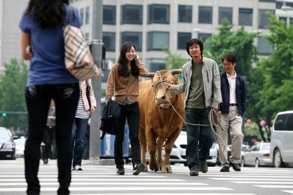 ▲'소와 함께 여행하는 법'(사진제공=롯데엔터테인먼트)