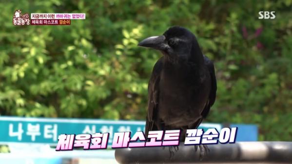 ▲'동물농장' 까마귀 깜순이(사진제공=SBS)