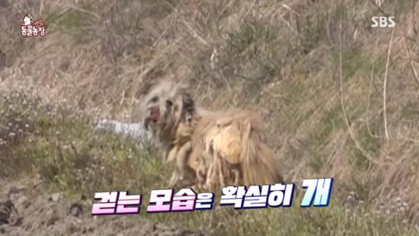 ▲동물농장 떠돌이 개(사진=SBS '동물농장' 방송화면 캡처)