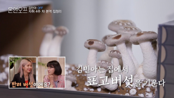 ▲집에서 표고버섯 키우기(사진=tvN '온앤오프' 방송화면 캡처)