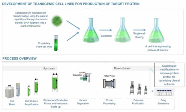 ▲프로탈릭스의 식물세포 배양을 통한 단백질 생산 과정(프로탈릭스 발표자료 참조)