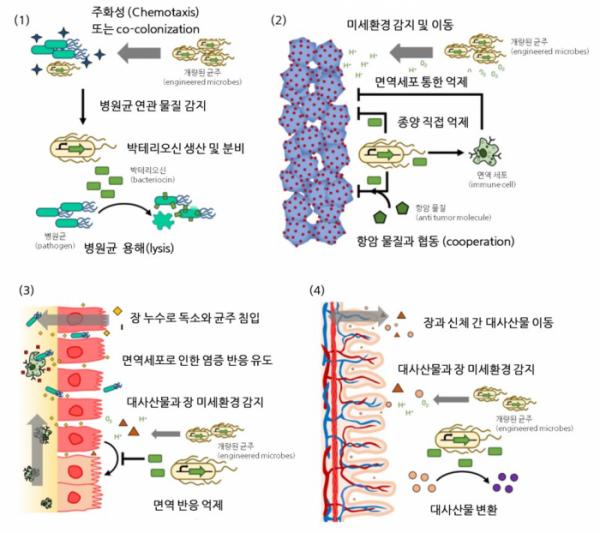 ▲그림 3 개량된 균주 조절(control)을 통한 진단 및 치료 방법에 대한 모식도(출처: Curr Opin Biotechnol. 2020 Jun 18;66:11-17)